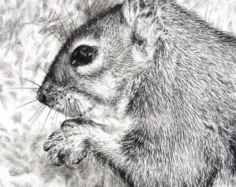 Squirrel original charcoal drawing, pencil drawing, wildlife drawing, wildlife art, squirrel picture, animal art, squirrel sketch, ooak
