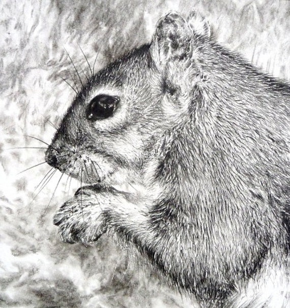 Squirrel original charcoal drawing, pencil drawing, wildlife drawing, wildlife art, squirrel picture, animal art, squirrel sketch, ooak