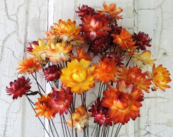 Dried Straw Flowers Bouquets 30 Mixed Fall Autumn Colors Yellow Gold Red Orange Stem Wired by Hand Painted Brown Floral Supply Strawflowers