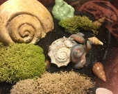 Cthulhu Hatchling Sea Shell - Fantasy Pet Perfect for Rock Gardens or Fantasy Sand Terrariums - Steampunk Sculpture Miniature Display