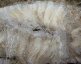Raw Wool Coated Ramboillet X Corriedale Yearling Fleece Exquisite