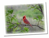 Cardinal Card, Red Bird Note Card, Nature Greeting Card, Wildlife