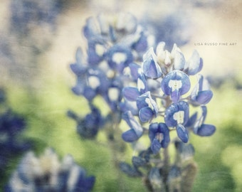 Blue Print or Canvas Wrap, Texas Bluebonnets, Spring Art, Bluebonnet, Texas Decor, Pastel Blue Flower Photography, Bluebonnet Print.