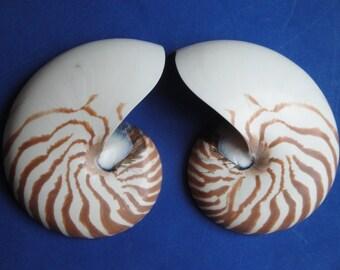 "Seashells 6"" Sliced Natural Nautilus Shell"
