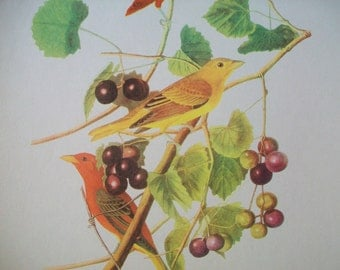 50 Audubon Birds of America Portfolio of Prints | Roger Tory Peterson vintage audubon birds | antique images of birds | collectible bird art