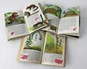 3 vintage Golden Nature Guides - Mammals - Reptiles and Amphibians - Flowers - 1950s pocket size books - color illustrations
