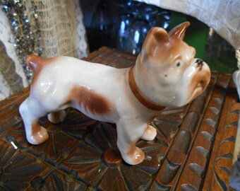 Brown And White Dog Occupied Japan