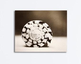 "Seashell Canvas Gallery Wrap - dark brown white beach photography coastal wall art sea shell neutral wrapped canvas print, ""Marbled Cone"""