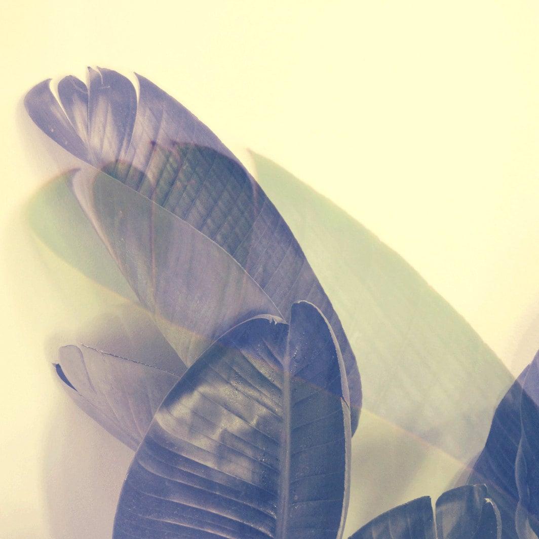 California Palms Modern Botanical Modern Wall Art Abstract