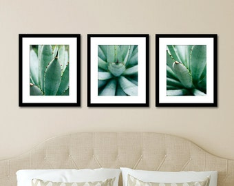Set Of 3 Agave Prints, Succulent Photography, Abstract Leaf Photo, Affordable  Wall Art