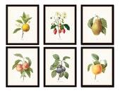 Antique Fruit Prints Set No. 3 - Redoute Fruit Prints - Gallery Wall Art - Giclee Canvas Prints - Print Sets - Botanical Prints - Canvas Art