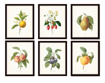 Antique Fruit Prints Set No. 3, Redoute Fruit Prints, Gallery Wall Art, Giclee Prints, Print Sets, Botanical Prints, Kitchen Art, Collage