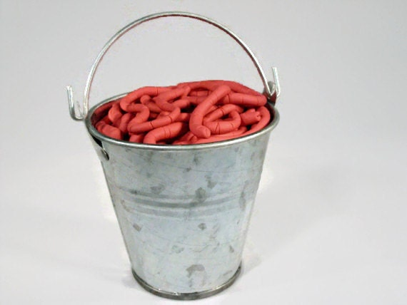 how to grow worms in a bucket