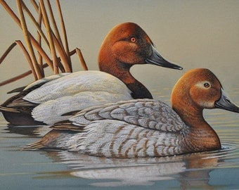 Canvasback Ducks 11 x 14 Original Painting with White Mat Waterfowl Birds Wall Decor by artist Doug Walpus