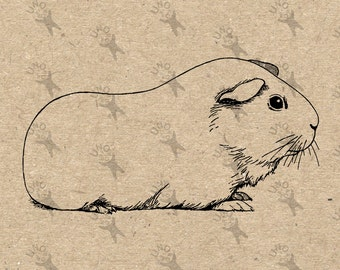 Guinea pig graphic – Etsy