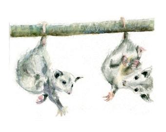 Watercolor Possums, Baby Possums Print, Possums Print, Possums Art