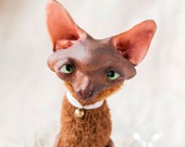 Cinnamon Oriental Cat