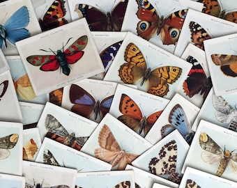 Vintage beautifully Illustrated large size Butterflies & Moths cigarette cards. 1938. Listing is for a selection of 4 cards.