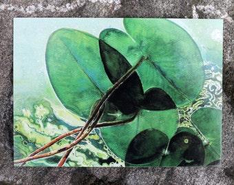 5 x postcard pack / postcards / postcard set / waterlily waterlilies / flower postcards / flower cards / nature postcards / green postcards