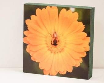 Honeybee Wall Panel - 8x8 Photo Standout, Ready to Hang Nature Photography, Macro Bee, Insect, Orange, Green Wall Art