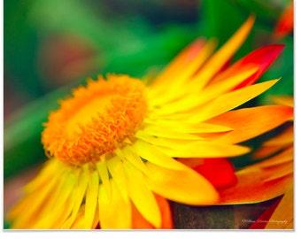 Beautiful Orange Flower Macro Nature Photography