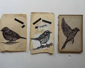 Three Little Birds, British Garden Birds Hand Draw, Origanal Illustrations With Ink on Vintage Book Pages.