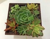 Succulent Plant. -  Completely Assembled Dish Garden Arrangement. Perfect Centerpiece or Gift!
