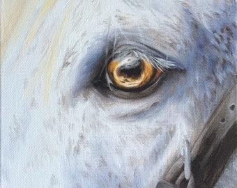Original Nicolae Equine Art Nicole Smith artist Horse oil painting white eye golden soul 6x6 boxed canvas