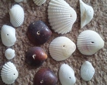 Supplies Seashells with the hole already in them. You can make jewelry or a wind chime
