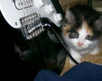 Cat Playing Guitar Etsy