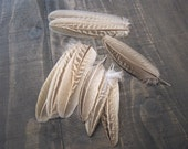 9 Pheasant Feathers ~ Cruelty Free