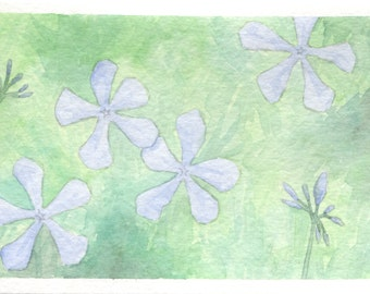 Blue Phlox Card