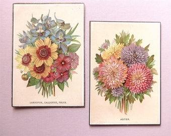 Floral prints, chromolithographic, 2 different, antique, - Asters, - Larkspur, Calliopsis, Phlox,  Language of Flowers, 1877.