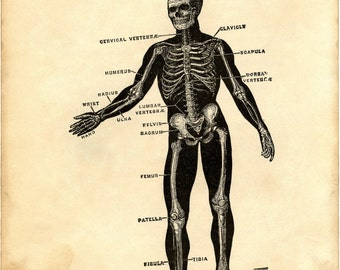 Skull poster, Medical, Doctor, Skull decor, Medical poster, Anatomy poster, Medical prints, Skull print, Anatomy, Anatomy print, 139