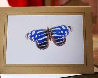 Butterfly Photo Greeting Card