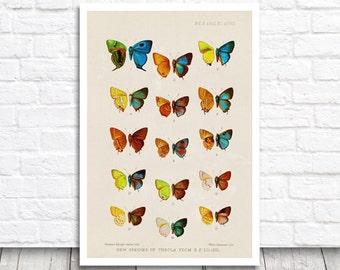 Butterfly Print, Vintage Print, Vintage Butterfly, Printable Art, Vintage Printable, Butterfly Printable, Digital Download, Digital Print