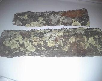 Lichen covered pine  bark slabs