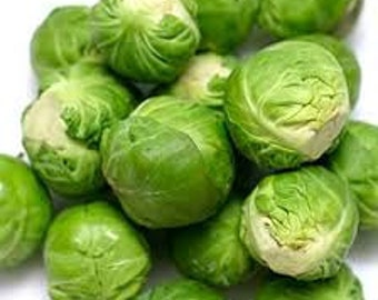 BRUSSELL SPROUT SEEDS 100 Fresh vegetable seed ready to plant in your garden