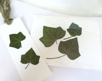 Handmade Pressed Ivy Leaves Card Bookmark Set Japanese Maple Blank All Occasion Greeting Card Sari Silk Tassel Booklover Bookworm Gift