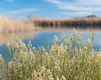 Sunny Day At The Lake (Fine Art Premium Photograph, Wall Decor, Home Decor)