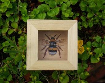 Faux taxidermy showcase bumblebee