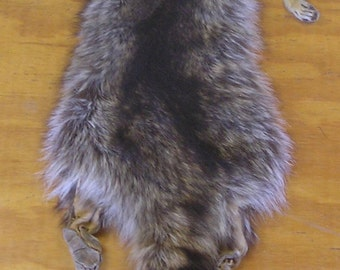 Large Wyoming Raccoon Skin with Feet & Claws