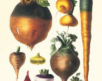 Vegetable art print Antique botanical print vegetable print kitchen art print antique wall art kitchen poster kitchen prints vegetable decor