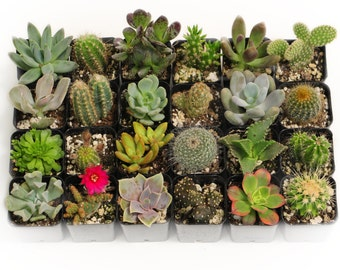 20 Beautiful Succulent Cactus Mix