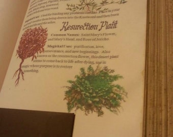 wicca HERBs  BOOK Book of Shadows for  Wicca Pagan Spells Book of Shadows grimoire Witch book of shadows Journal  old