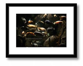Fish in Aquarium, Nature Photography, Color,Gold, Fish, Aquarium, Wall decor