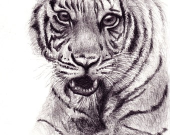 Original ATC Pencil Drawing of Tiger