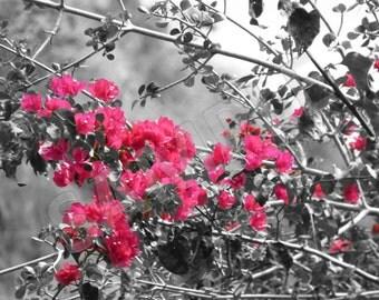 Oahu Flower 1.  Instant Download