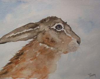 Brown Hare - Nosy!