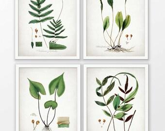 Green Plant Art Set Of 4 Prints - Green Decor - Botanical Print - Green Leaf - Green Leaves - Set Of Four Prints #1616 - INSTANT DOWNLOAD